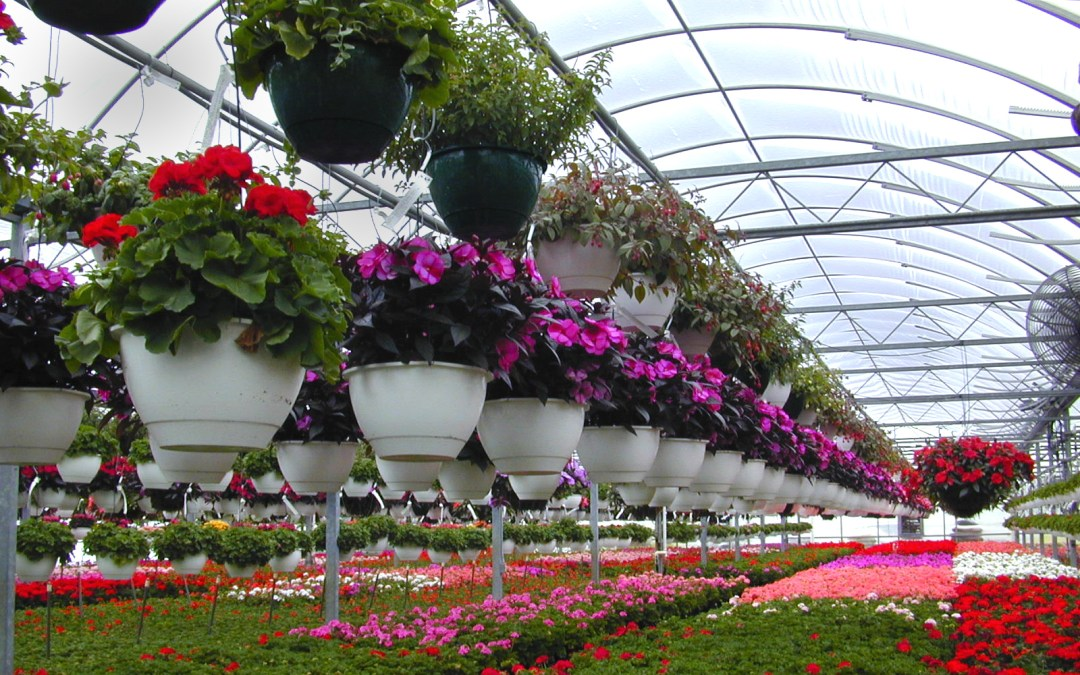 Floriculture.jpg
